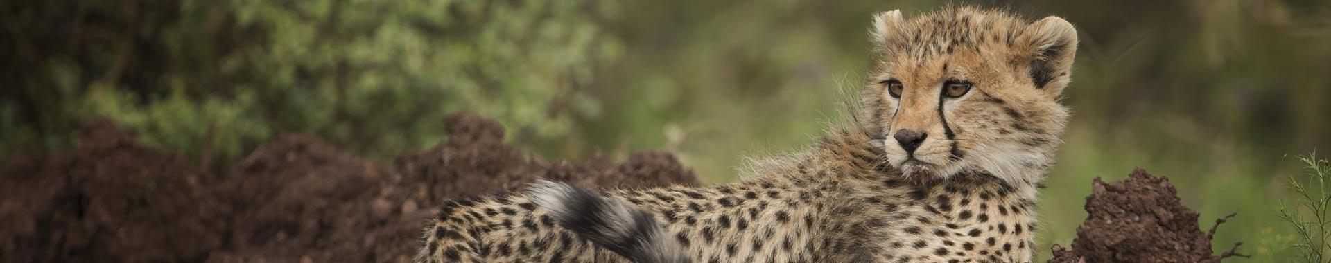 Всё о восхождении на Килиманджаро и сафари в Танзании